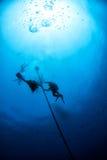 Mergulhadores sob o barco pelo tempo do deco no azul Imagem de Stock Royalty Free