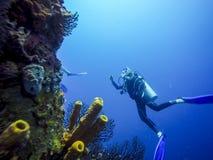 Mergulhando em Barbados, das caraíbas Foto de Stock