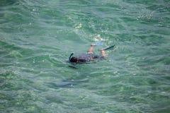 Mergulhando o mergulhador que procura peixes nas águas mornas Imagens de Stock Royalty Free