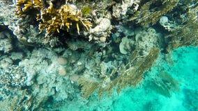 Mergulhando o recife de corais filme