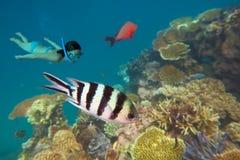 Mergulhar no grande recife de coral Queensland Austrália fotografia de stock