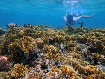 Mergulhar subaquático do homem em um recife de corais raso Fotos de Stock