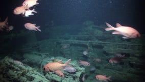 Mergulho autônomo perto da embarcação oxidada da carga do naufrágio subaquática vídeos de arquivo