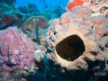 Mergulho autônomo nos recifes de corais em México fotografia de stock