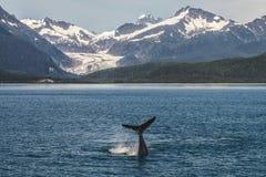 Mergulho da baleia de corcunda do bebê na frente da geleira fotografia de stock royalty free