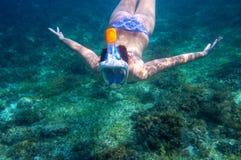 f36ae0896 Mergulho da jovem mulher submarino Tubo de respiração no recife de corais  do mar tropical Mulher