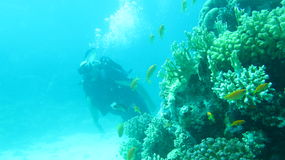 Mergulho do Mar Vermelho imagem de stock