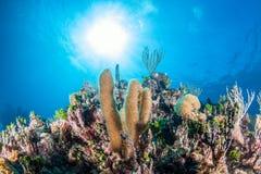 Mergulho do recife Fotografia de Stock
