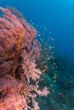 Mergulho em bali Foto de Stock