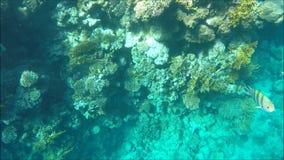 Mergulho em Egipto filme