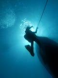 Mergulho mediterrâneo Imagem de Stock Royalty Free