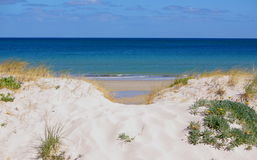 Mergulho na duna de areia Imagens de Stock Royalty Free
