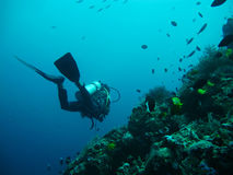 Mergulho no mar Fotos de Stock Royalty Free