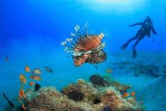 Mergulho no Mar Vermelho Foto de Stock
