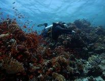 Mergulho no Mar Vermelho Foto de Stock Royalty Free