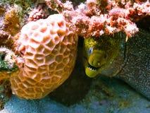 Mergulho no mundo subaquático do recife de corais imagens de stock royalty free