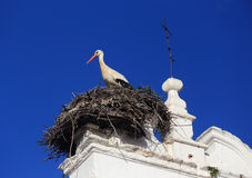 Merida, Extremadura, Spain. Stork nesting. Royalty Free Stock Images