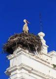 Merida, Extremadura, Spain. Stork nesting. Stock Photos