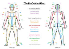 Meridian System Description Chart Male Body royalty free illustration