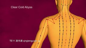 Meridiano triplo dello stimolatore, 3D illustrazione, agopuntura archivi video