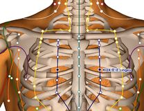 Acupuncture Point KI24 Lingxu, 3D Illustration Stock Images