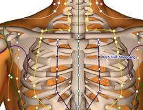 Acupuncture Point KI25 Shencang, 3D Illustration Royalty Free Stock Images