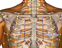 Acupuncture Point KI23 Shenfeng, 3D Illustration Stock Photography