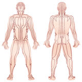 Meridians Male Body TCM Royalty Free Stock Photo