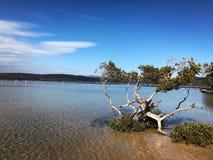 Merimbula nsw澳大利亚 免版税库存图片