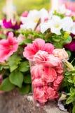Meringues roses en verre et fleurs dehors Photos stock