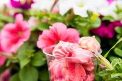 Meringues roses en verre et fleurs dehors Images stock