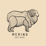 Merino sheep logo, label. Vector ram illustration. Ewe soft wool sign. Fleece icon background. Royalty Free Stock Images