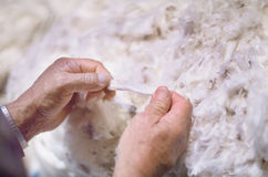 Merino Wool Stock Photos