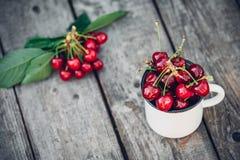 Merises fraîchement sélectionnées organiques mûres dans la tasse d'émail de vintage sur le fond vert de nature de jardin de feuil Photographie stock