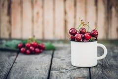 Merises fraîchement sélectionnées organiques mûres dans la tasse d'émail de vintage sur le fond vert de nature de jardin de feuil Image stock