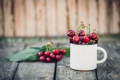 Merises fraîchement sélectionnées organiques mûres dans la tasse d'émail de vintage sur le fond vert de nature de jardin de feuil Photographie stock libre de droits