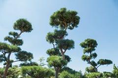 Merkwürdige Bäume Stockbild