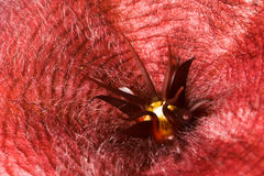 Merkwürdige Blume Stockfoto