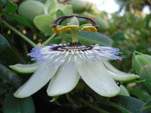 Merkwürdige Blume Lizenzfreies Stockfoto