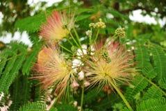 Merkwürdige Blumen Stockfotos