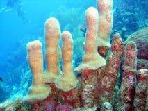 Merkwürdige Koralle Stockfotografie