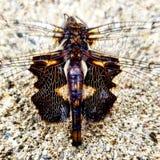 Merkwürdige Libelle lizenzfreies stockbild