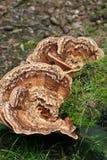 Merkwürdige Pilze Stockfotos