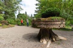 Merkwürdige Skulptur, die ein bonzai, Metis-sur-MER, Quebec, Kanada stützt stockfotos
