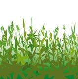 Merkwürdige Vegetation (Vektor) Stockfotografie