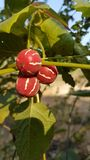 Merkwürdige Wildfrüchte lizenzfreie stockbilder