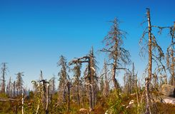 Merkwürdiger trockener Wald Lizenzfreie Stockbilder
