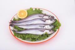 Merlans bleus (poissons) Photo libre de droits