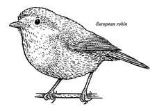 Merle européen, illustration de rubecula d'Erithacus, dessin, gravure, encre, schéma, vecteur illustration stock