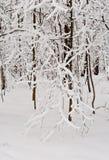 Merletto della neve Immagini Stock